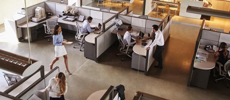 Human Resources: Employment Law Basics