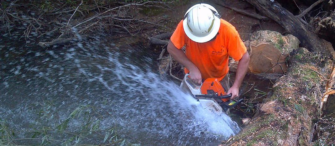BrownBark Tree Service - Clarion, PA